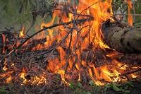 Formulář pro nahlašování pálení